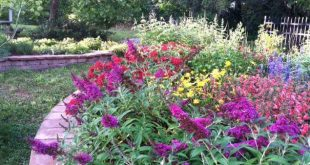 Celebrating 16 years of the Joseph A. Strasser Butterfly Festival!