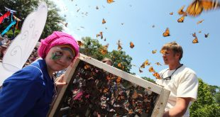 A Bright Symphony of Colors: Joseph A. Strasser Butterfly Festival at Tree Hill Nature Center in Arlington