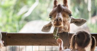JACKSONVILLE ZOO AND GARDENS ASKS FOR HELP TO RAISE $250,000 BY SUNDAY